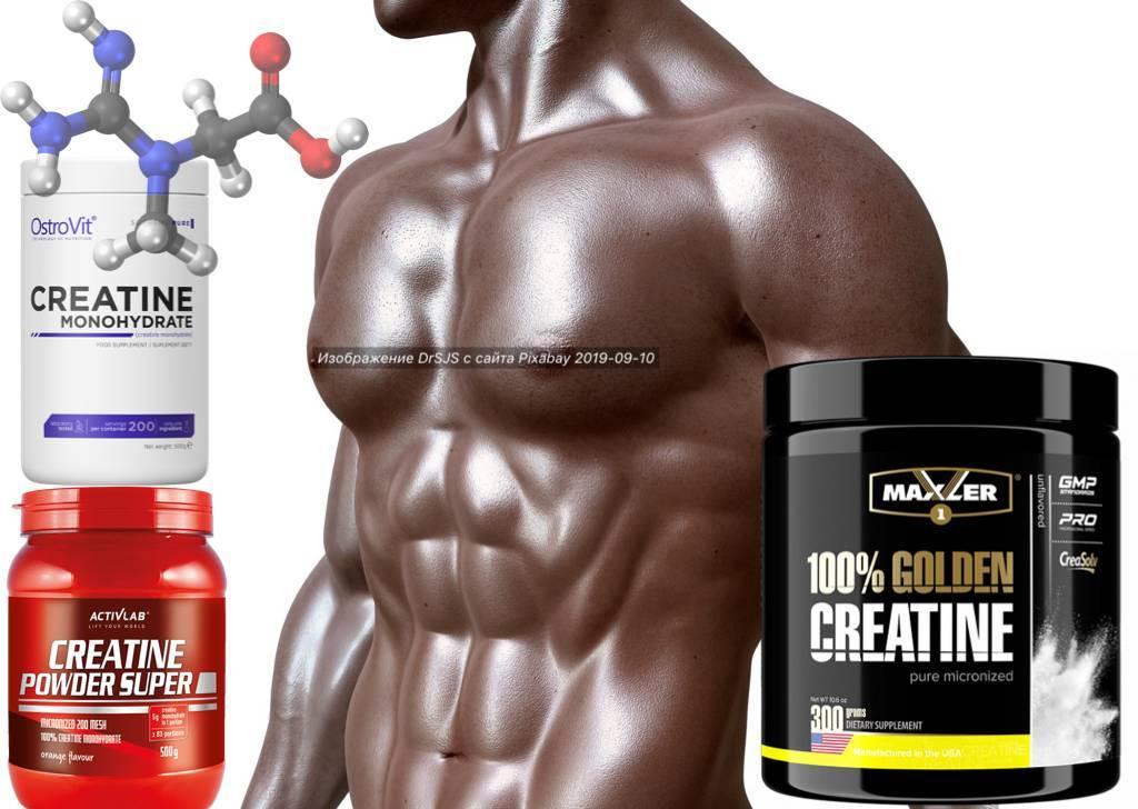 Спортивное питание для сушки: протеин, bcaa и креатин, что можно принимать