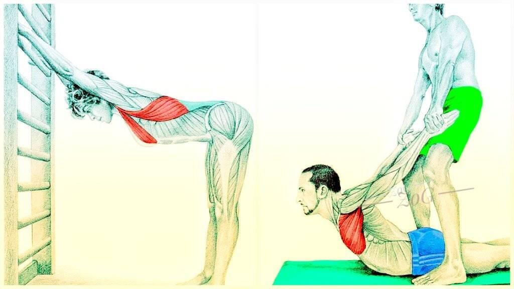 Фитнес-мифы: растяжка делает мышцы длинными и рельефными