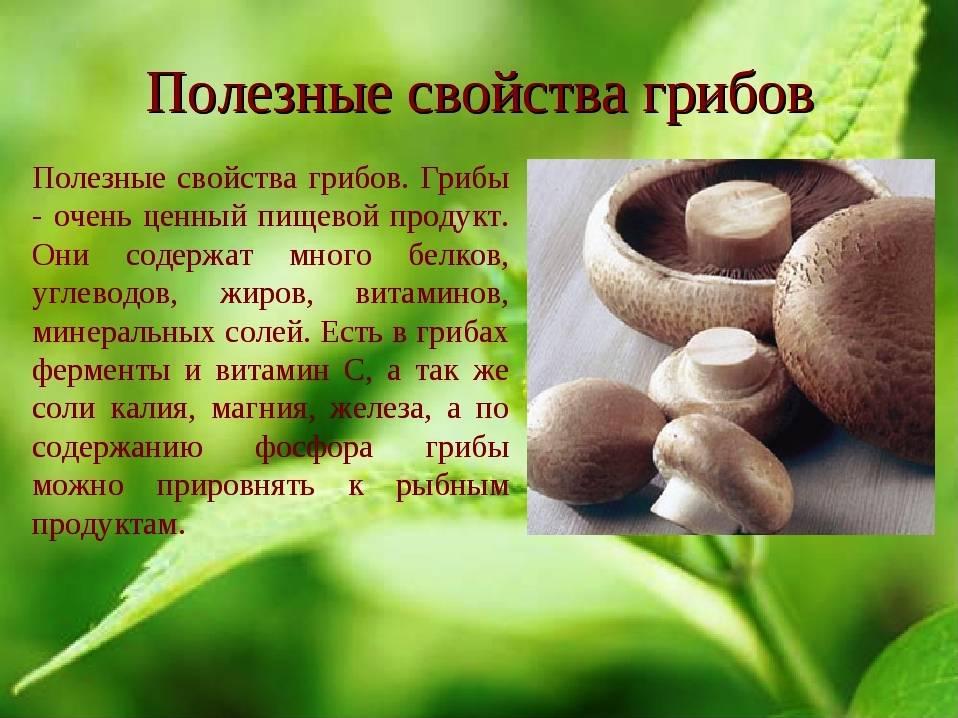 Как перевариваются грибы в организме человека   tsitologiya.su