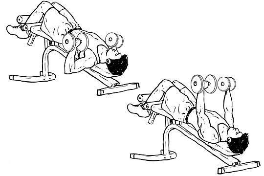 Жим штанги лежа: выполнение, техника