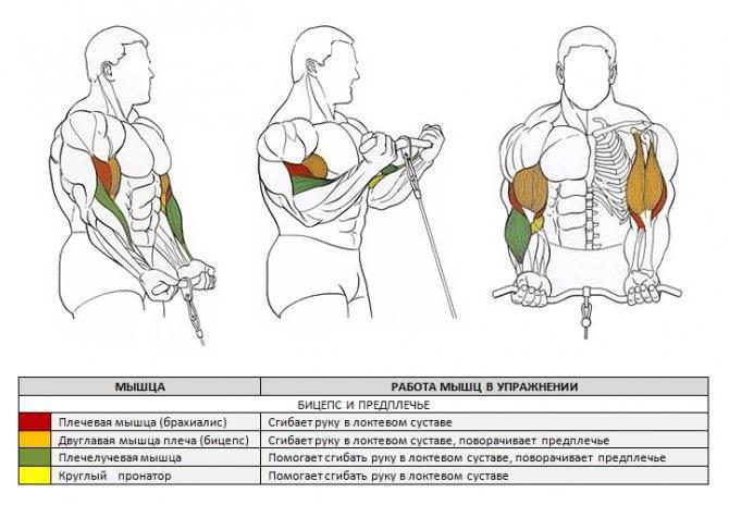 2 упражнения для силы и объема рук