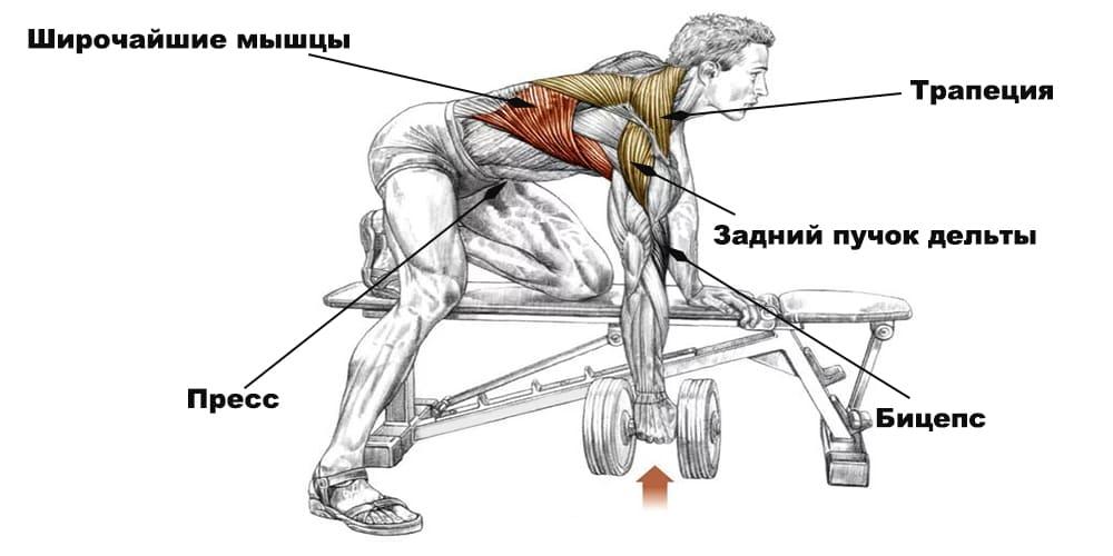 Вертикальная тяга гантели к поясу в наклоне на скамье: техника упражнения и общие рекомендации
