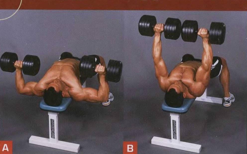 Жим гантелей на скамье с наклоном вверх: фото и видео упражнения