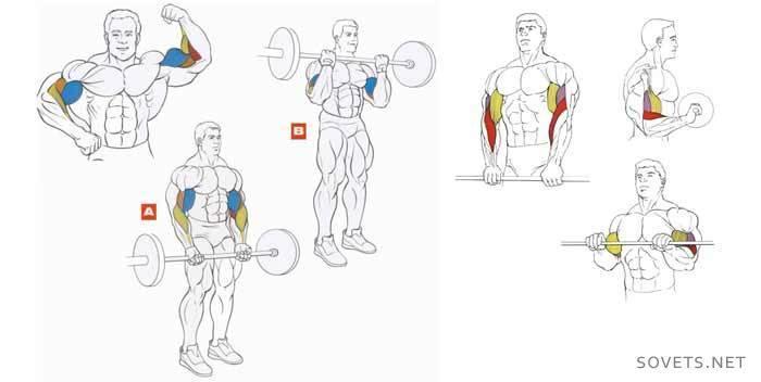 Как накачать мышцы рук мужчинам дома — спорт и красота