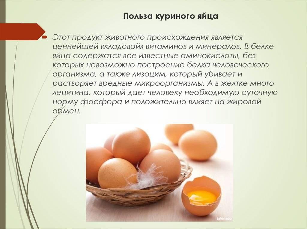 Яйцо куриное польза и вред для здоровья организма женщин, мужчин