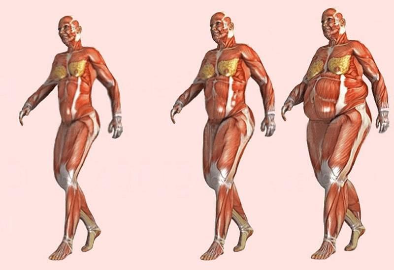 Можно ли превратить жир в мышцы? что говорит наука