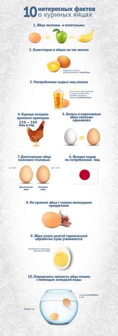 Вся польза куриных яиц для здоровья сердца и предотвращения болезней