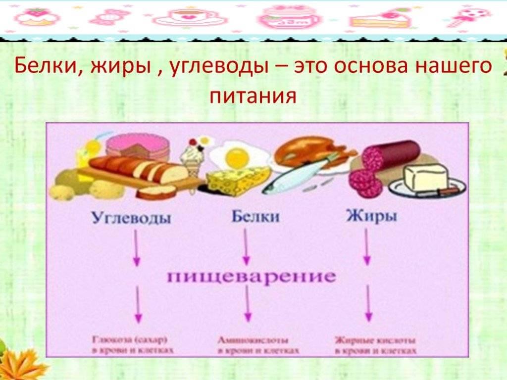 Питательные вещества - белки, жиры, углеводы, минералы, витамины, вода