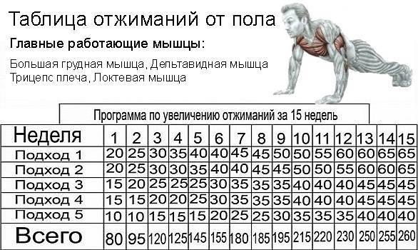 Отжимания от пола: какие мышцы качаются