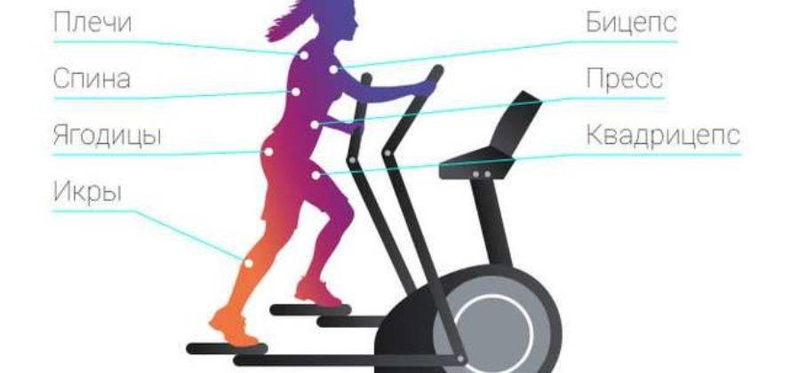 Полное руководство: как правильно заниматься на эллиптическом тренажере, чтобы похудеть