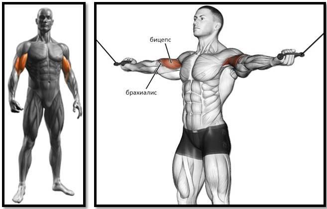 Как накачать брахиалис? мышца брахиалис — супер прокачка