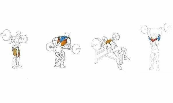 Какие группы мышц совмещать в одной тренировке?