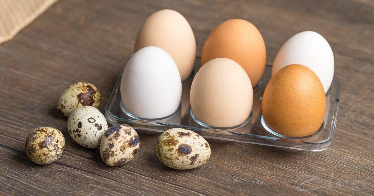 Можно ли есть перепелиные яйца при высоком холестерине?