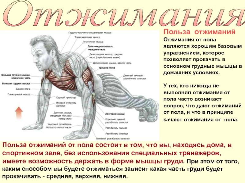 Как накачать грудные мышцы в домашних условиях? лучшие упражнения для мужчин - tony.ru