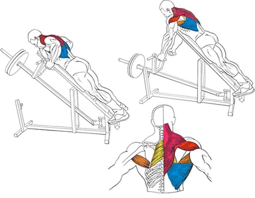 3 вида тяги гантелей в наклоне для эффективного развития мышц спины