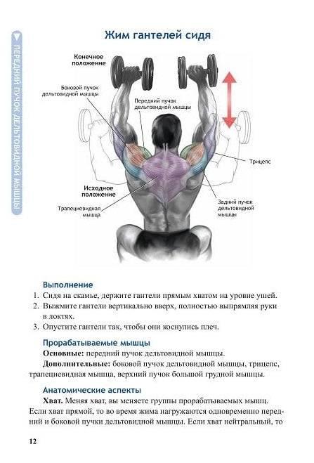 Жим гантелей сидя: техника выполнения упражнения, эффективность - tony.ru