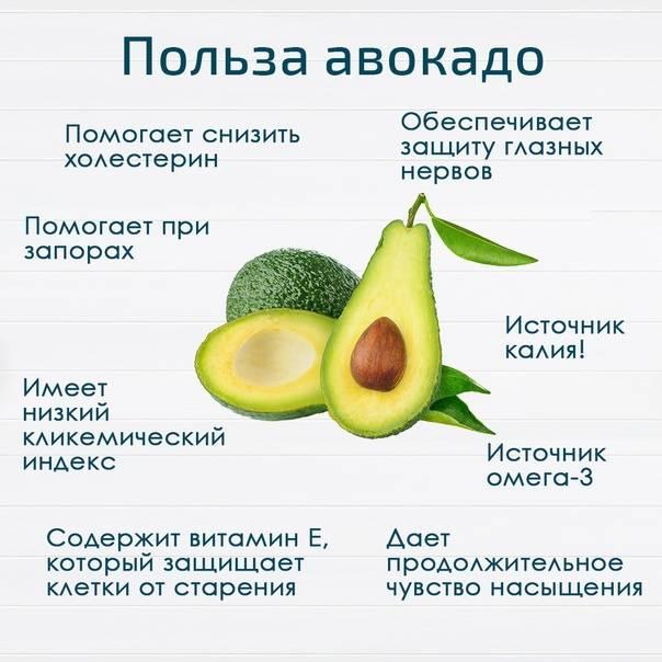 Авокадо – калорийность, полезные свойства и вред для организма