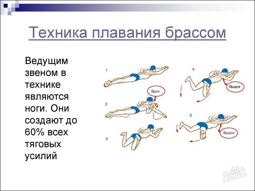 Техника плавания брассом для начинающих: как правильно плавать этим стилем, движения ног и рук пошагово, видео, ошибки и советы