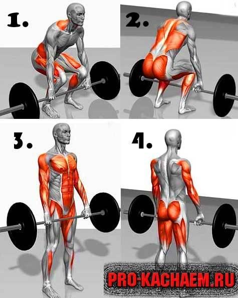 Становая тяга сумо ☛ какие мышцы задействует, чем отличается от классической