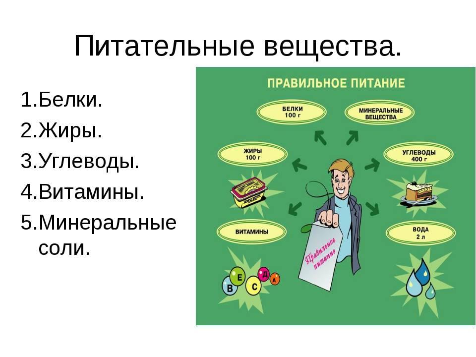Лекция № 10. значение белков и жиров в питании человека