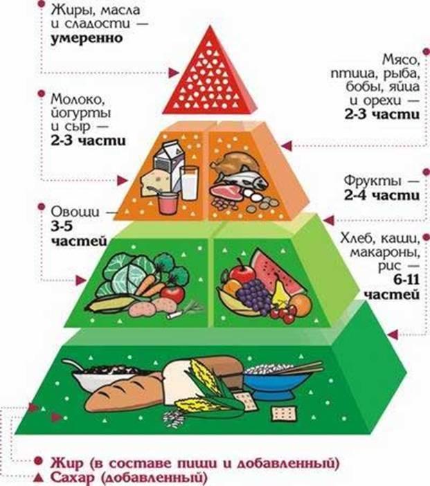 Распределение пищи