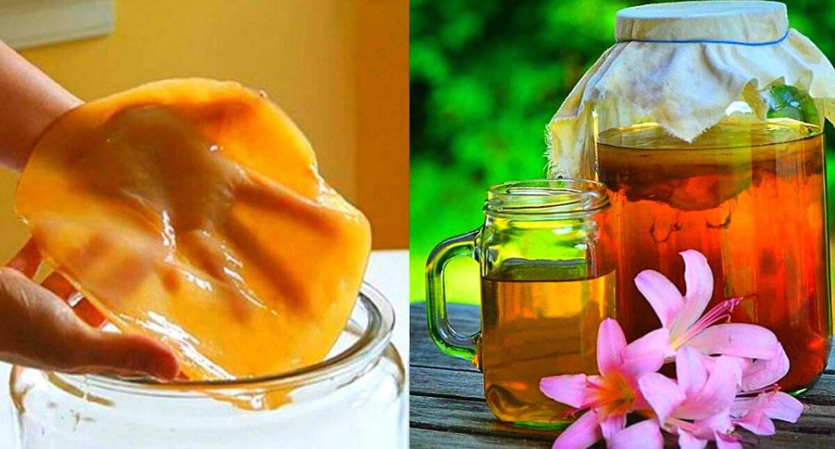 Чайный гриб, полезные свойства и противопоказания   лечение травами - народные рецепты