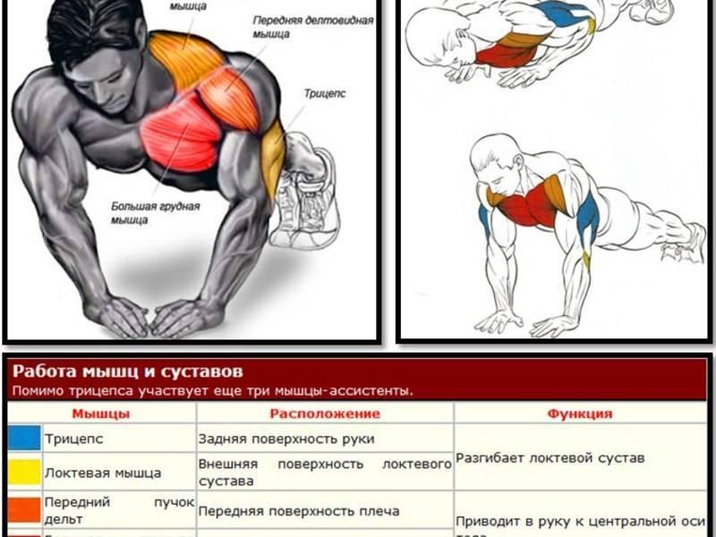 Лучшие виды отжиманий от пола: разновидности и способы как отжиматься на разные группы мышц
