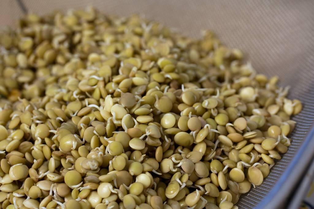 Соя: состав, цена, польза и вред семян, бобов, пророщенных ростков, как растет и выглядит растение на фото, как готовить, что делают из нее
