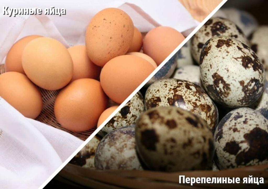 Опасно ли есть яйца и богатую холестерином пищу?