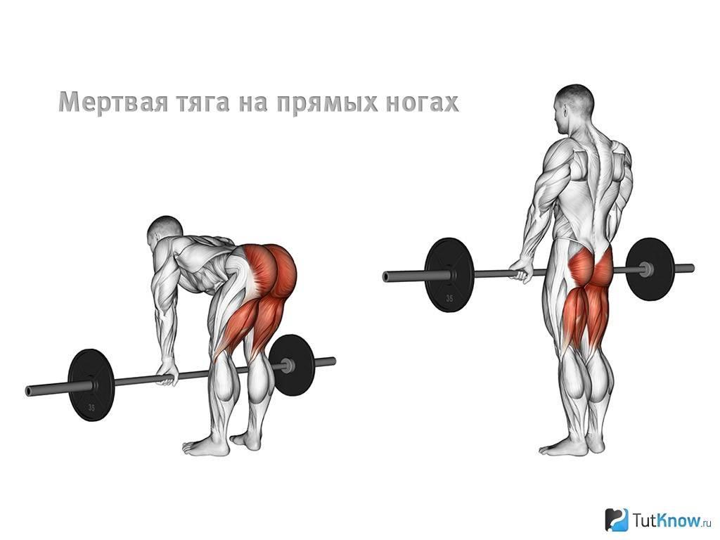 Мертвая тяга: техника выполнения упражнения со штангой и гантелями