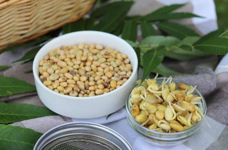 Чем полезны ростки пророщенной фасоли и как можно приготовить