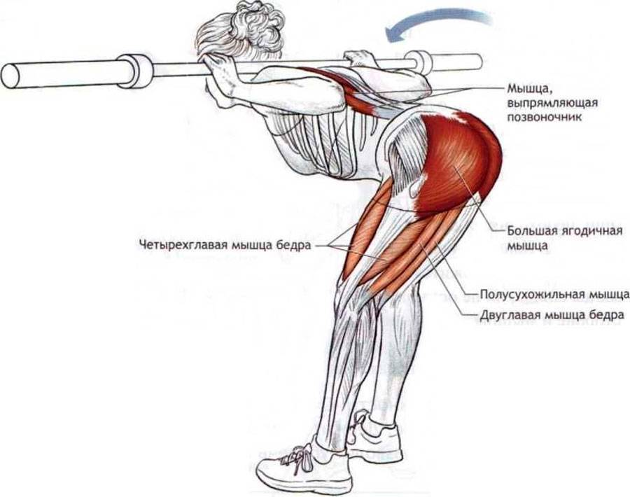 Приседания с колен: техника выполнения, работающие мышцы и польза