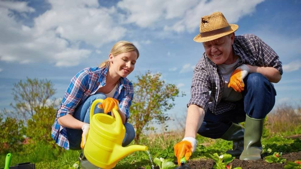 Почему болит спина на даче? как правильно работать в огороде, чтобы не навредить позвоночнику | запитание