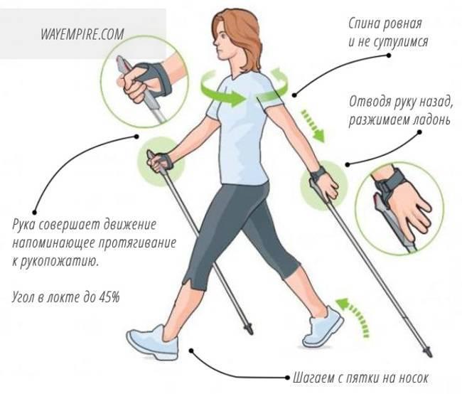Скандинавская ходьба с палками: польза и вред, плюсы и минусы, противопоказания, кому нельзя