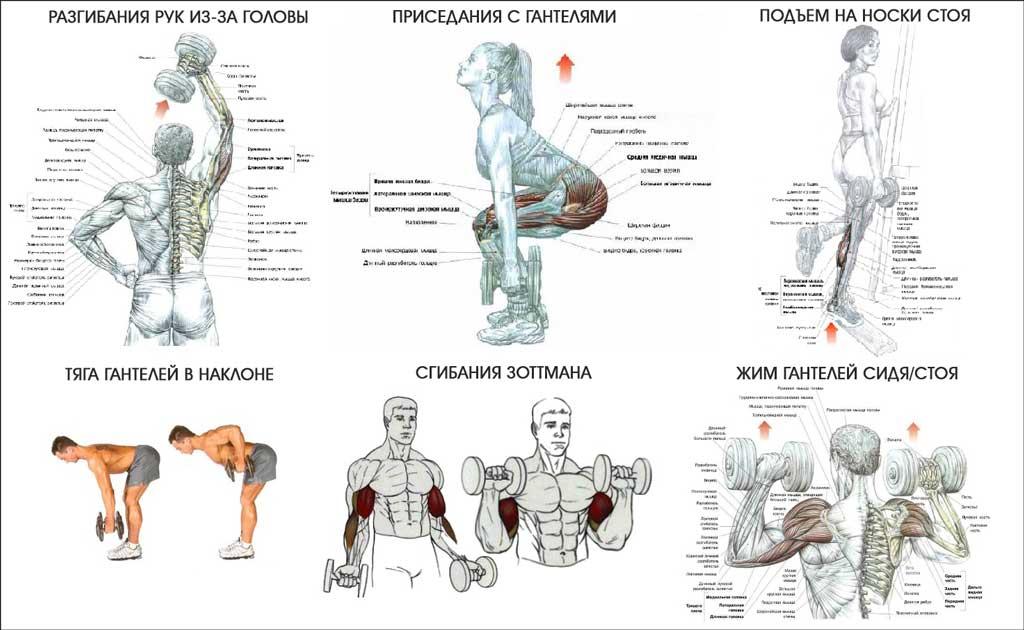 Упражнения с гантелями для женщин – sportfito — сайт о спорте и здоровом образе жизни