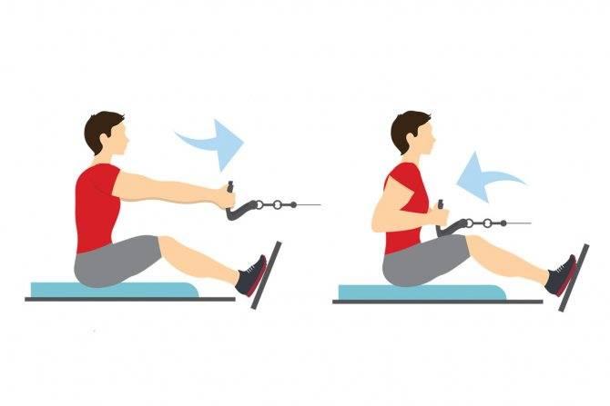 Тяга горизонтального блока. упражнение для спины на тренажёре | bestbodyblog.com