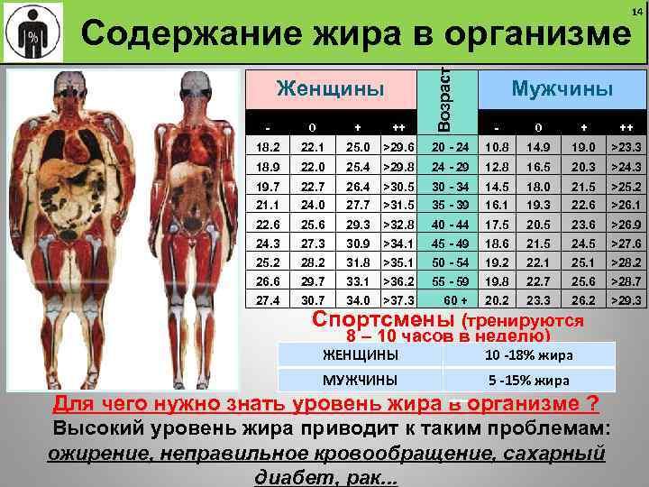 Процент жира в организме. кого, чего и сколько?  процент жира в организме. кого, чего и сколько?