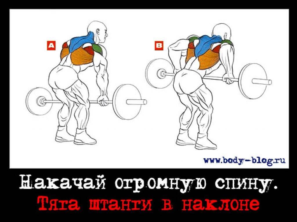 Как правильно прокачать мышцы спины