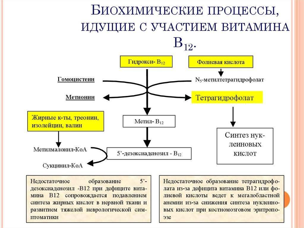 Витамин b4: холин в таблетках, ампулах   food and health