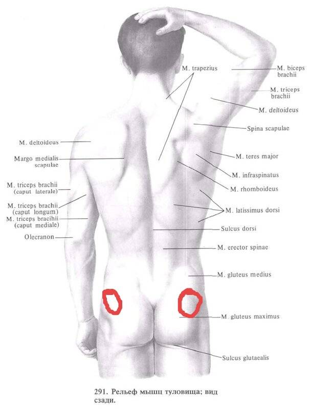 О чем могут говорить боли слева под лопаткой сзади со спины?