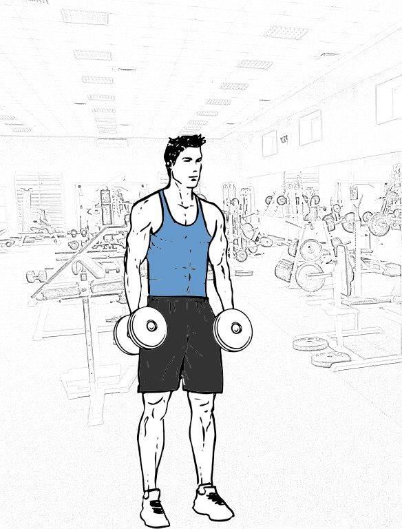 Подъем гантелей на бицепс стоя: правильная техника и особенности выполнения упражнения