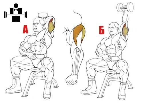 Жим штанги из за головы: сидя, стоя, в смите. жим штанги из за головы: какие мышцы работают, техника