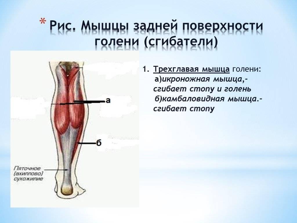 Голеностопный сустав. анатомия и патология: кости и связки стопы