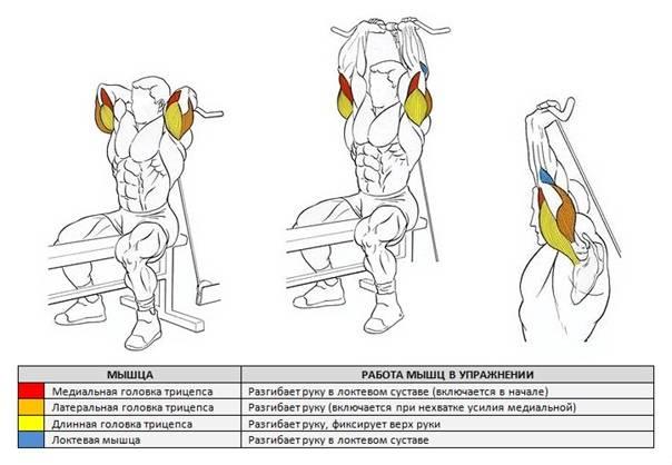 Комплекс упражнений на трицепс с гантелями