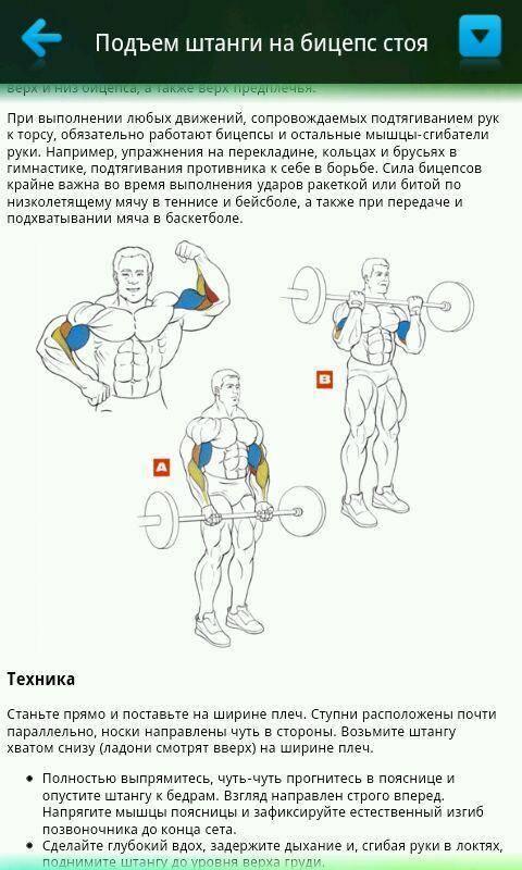 Упражнения на бицепс со штангой