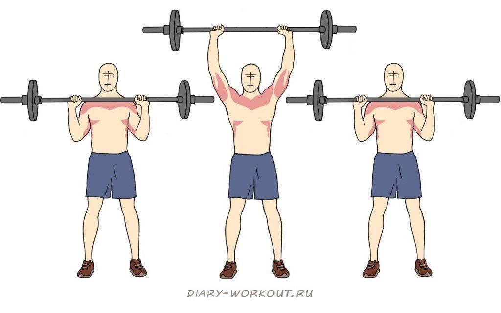Жим штанги стоя: полная техника выполнения, какие мышцы работают