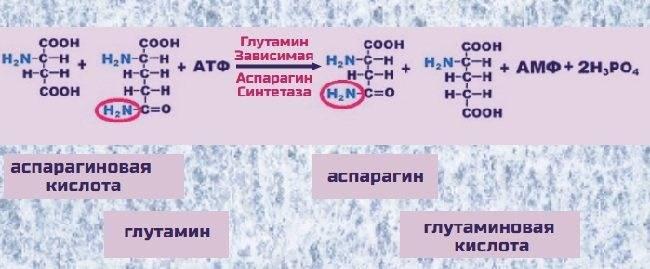 Аспарагиновая кислота – что это такое, свойства и в каких продуктах содержится