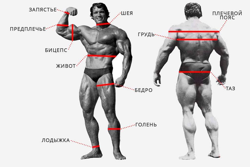 Какими должны быть пропорции тела менс физик? идеальные параметры тела пляжника