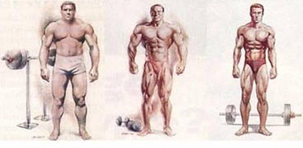 Мезоморфный тип телосложения - что нужно знать - medical insider