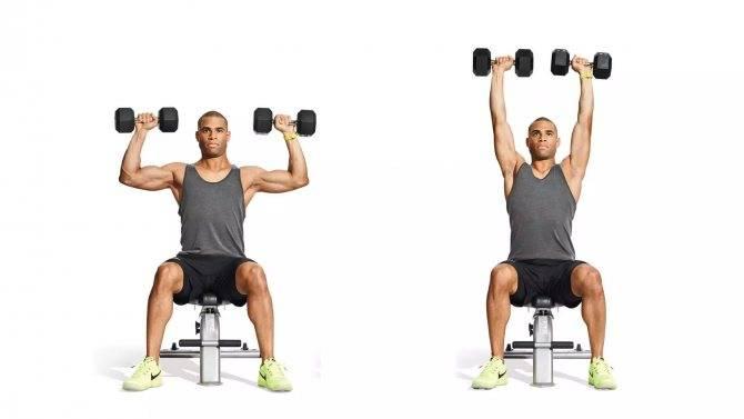 Жим гантелей вверх сидя: техника выполнения. упражнения для рук с гантелями